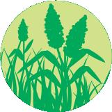 icono-verde-003